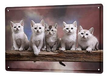 Decoración Gato Cartel de chapa Placa metal tin sign gatos jóvenes rama Letrero De Metal 20X30 cm: Amazon.es: Hogar