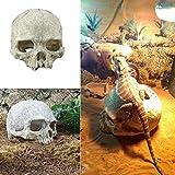 Afco Aquarium Fish Tank Resin Skull Underwater Landscape Hiding Decoration Terrarium Reptile Ornaments size 14cm x 11cm x 10cm (White)