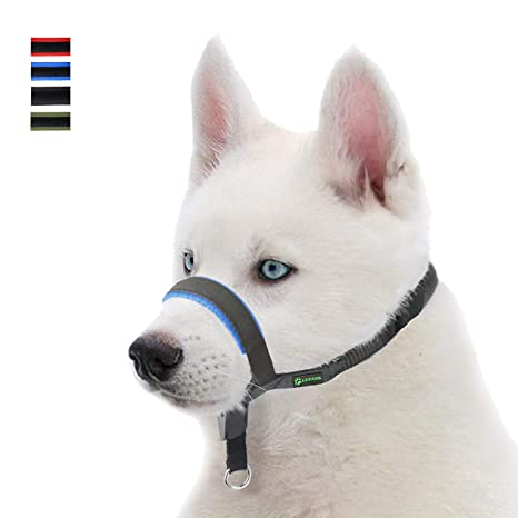 RockPet Collier pour t/ête de Chien rembourr/é en Cuir Confortable au Toucher Outil dentra/înement Laisse de Chien pour Stopper la Traction M,Bleu Ajustable