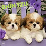 Shih Tzu Puppies 2018 12 x 12 Inch Monthly Square Wall Calendar, Animal Small Dog Breed Puppies (Multilingual Edition)