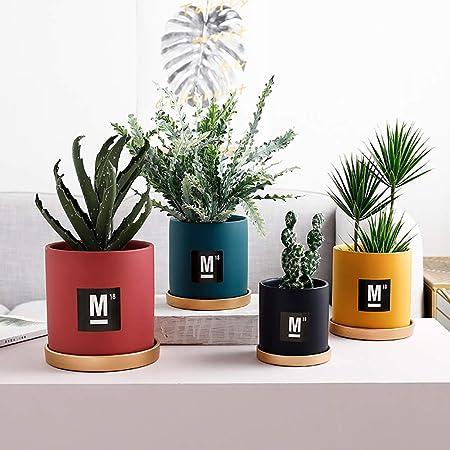 34 Succulent Garden Ideas