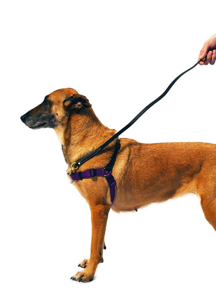 SENSE-ation No-Pull Dog Harness - Purple by Softouch: Amazon.es: Hogar