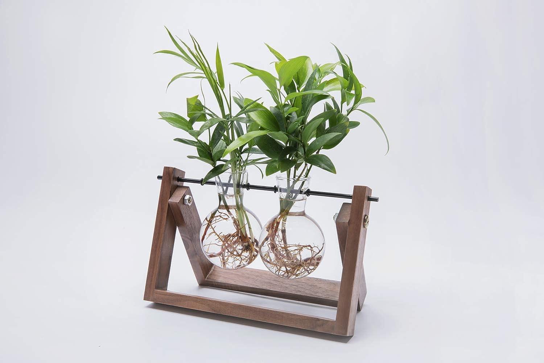 Cyan Shirt Glass Planter Bulb Vase with Walnut Wooden Stand Metal Swivel Holder for Hydroponics Plants Home Decor Office Decor 1 Terrarium