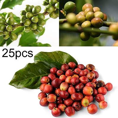 wpOP59NE 25Pcs Coffee Bean Seeds Easy to Grow Plant Home Garden Yard Farm Bonsai Decor - 25PCS Coffee Bean Seeds Plant Seeds : Garden & Outdoor