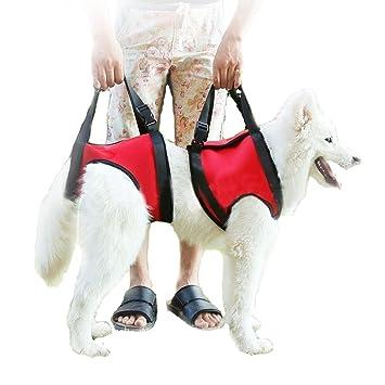Pañales para perros invalidos