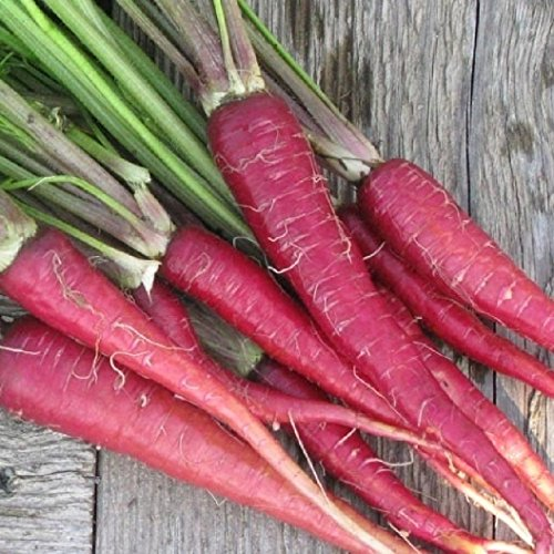 Cheap Bulk Organic Atomic Red Carrot Seeds (1 lb)
