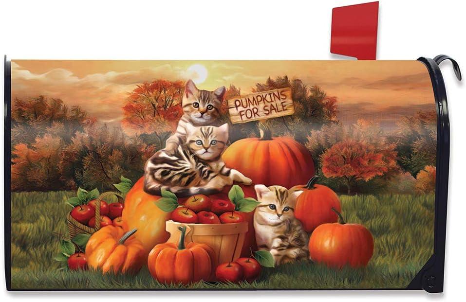 Briarwood Lane Fall Kittens Pumpkins Magnetic Mailbox Cover Apple Basket Autumn Standard