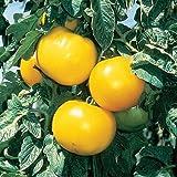 lemon tomato - (VTOH)~