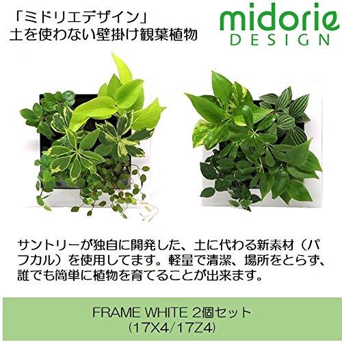 ミドリエデザイン 土を使わない 壁掛け 観葉植物 FRAMEホワイト2個(17X4/17Z4) セット 給水ボトル1個付き B07CHFVVCG