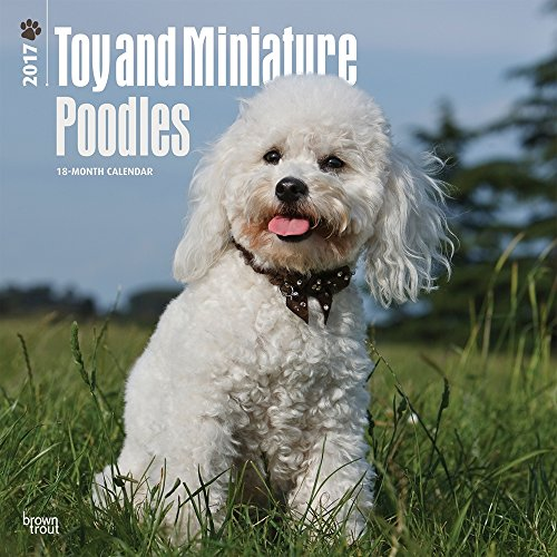 2017 Monthly Wall Calendar - Toy and Miniature Poodles