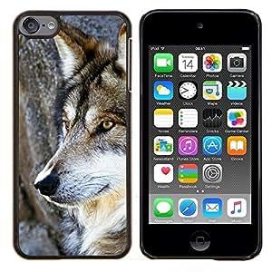 TECHCASE---Cubierta de la caja de protección para la piel dura ** Apple iPod Touch 6 6th Touch6 ** --Wol salvaje árbol Naturaleza Animal Perro de Brown