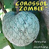~COROSSOL ZOMBIE~ Annona montana MOUNTAIN SOURSOP RARE FRUIT Tree lg 3ft PLANT