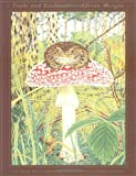 Toads and Toadstools, Adrian Morgan, 0890877777