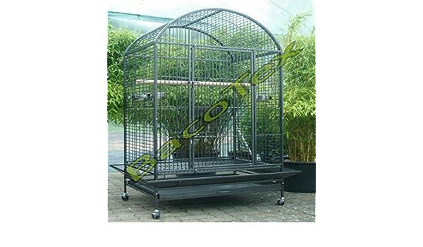 Loro jaula Gigant g de 801: Amazon.es: Productos para mascotas