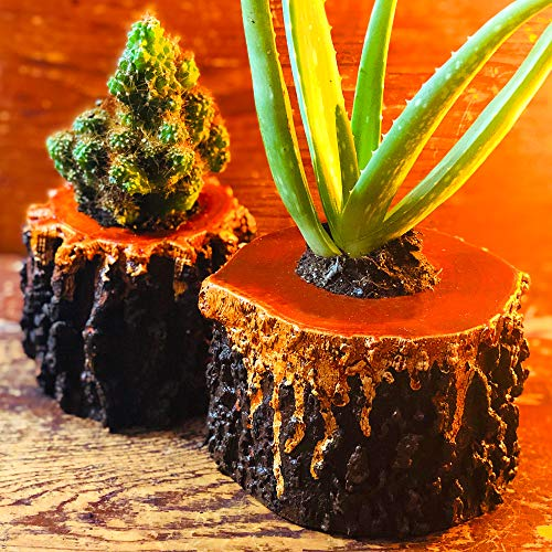 (Live Potted Aloe & Succulent Set  Cool Plant Mix in Unique Painted Lava Wood Pots  Easy to Care for Unique Indoor Kitchen & Table Planters)