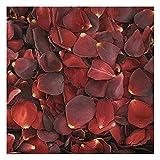 Hot Cocoa Rose Petals - 240 cups Rose Petals. Wedding Petals from Flyboy Naturals