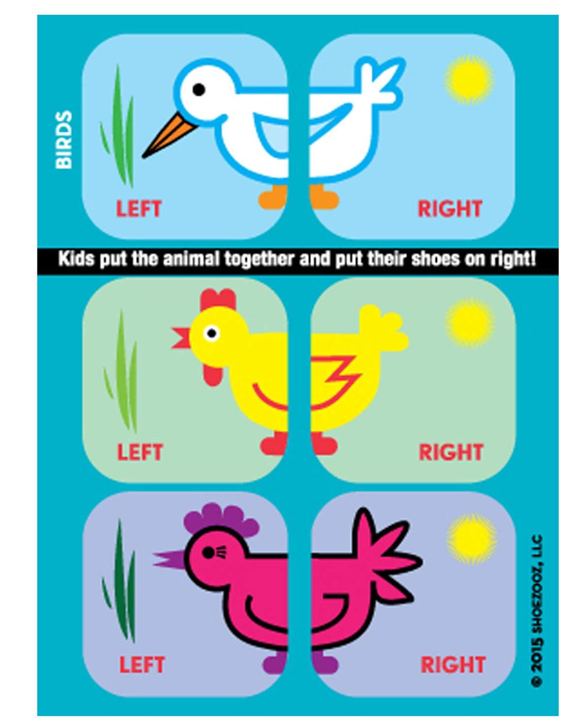 Amazon com shoezooz • educational shoe stickers for kids birds clothing