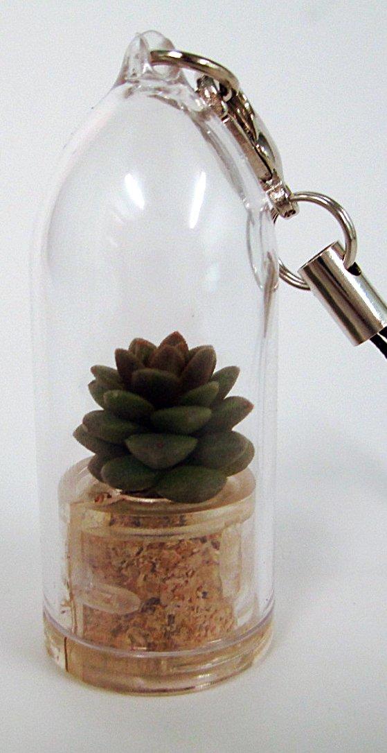 Desert Live Succulent Terrarium Plant Keychain Accessory