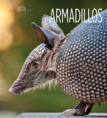 armadillos-living-wild