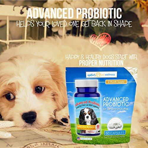 Agathas Apothecary complex Probiotic Probiotics