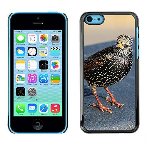 Premio Sottile Slim Cassa Custodia Case Cover Shell // F00016044 Oiseau // Apple iPhone 5C