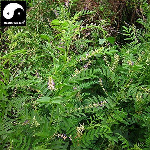 20 graines Glycyrrhiza Glabra-réglisse