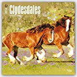 Clydesdales 2016 Square 12x12