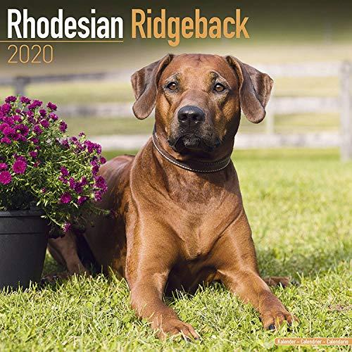 Rhodesian Ridgeback Calendar 2020 - Dog Breed Calendar - Wall Calendar 2019-2020