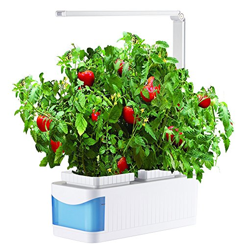 Growing Herbs Under Led Lights in Florida - 5