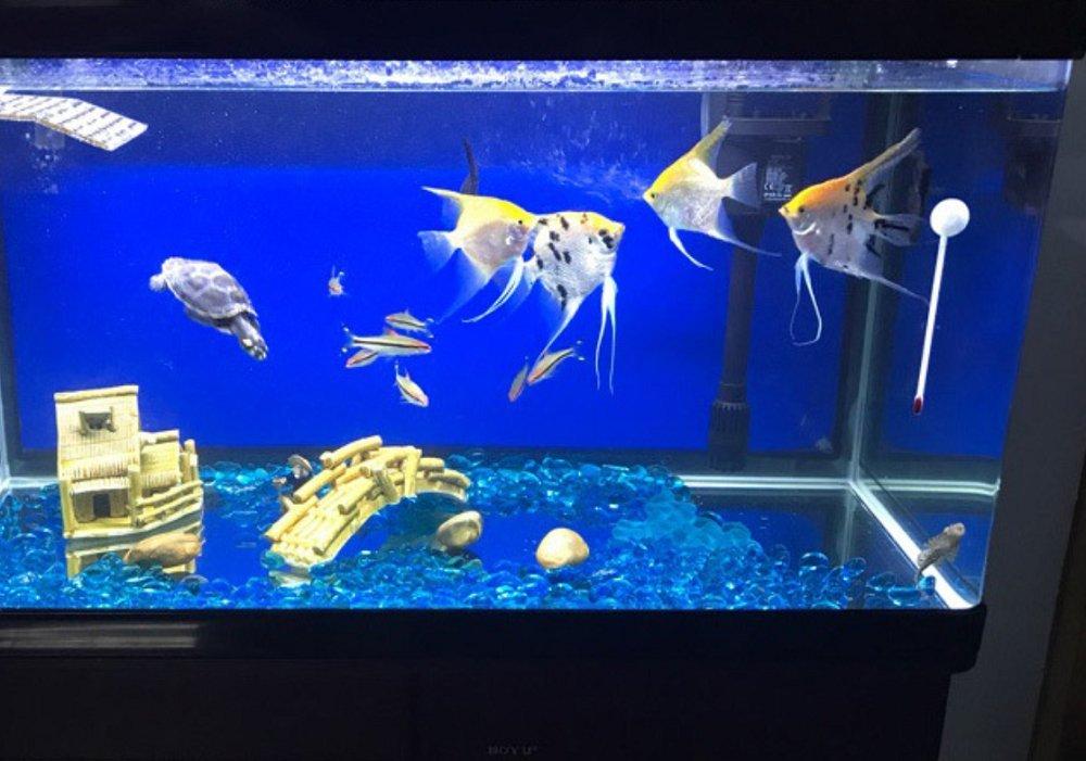 1 Pound of Enough Decorative Gravel Rock Gravel Pebbles gem Hewnda Gorgeous Aquarium Decorated with Aquarium Decorations Glass Beads Aquarium