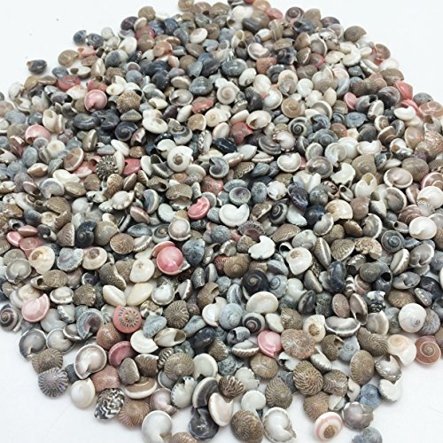 (PEPPERLONELY Pink Tiny Pearl Umbonium Button Sea Shells, 8 OZ Apprx.1200+ PC Shells, 3/8Inch)