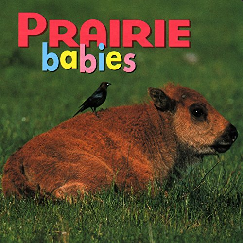 Prairie Babies (Animal Babies) (Best Baby Shops In Singapore)