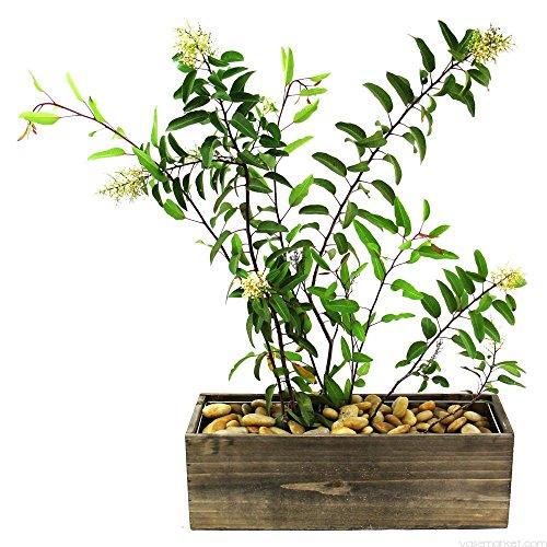 "CYS Excel Rustic Planter Box, 15 Sizes Available, Wood Planter, Decorative Box, Succulent and Floral Arrangements, Window Box with Removable Liner, Wedding DÉCOR H:5"" Open:15x5"""