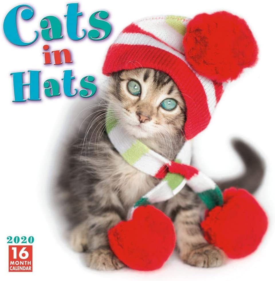 Cats In Hats Square Wall Calendar 2020
