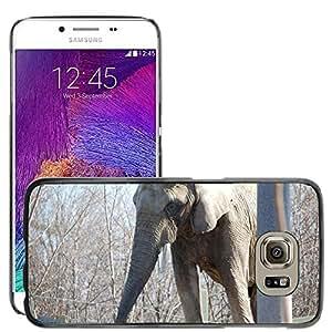 Etui Housse Coque de Protection Cover Rigide pour // M00135507 Elefante Animal Zoo Fauna y flora // Samsung Galaxy S6 (Not Fits S6 EDGE)
