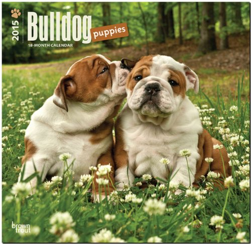 english bulldog 2015 calendar - 3