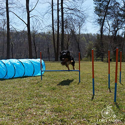 Lord Anson™ Dog Agility Set - Dog Agility Equipment - 1 Dog Tunnel, 6 Weave Poles, 1 Dog Agility Jump - Canine Agility Set for Dog Training, Obedience, Rehabilitation by Lord Anson (Image #5)