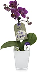 Hallmark Flowers Petite Purple Orchid in 2.5-Inch White Glass Container
