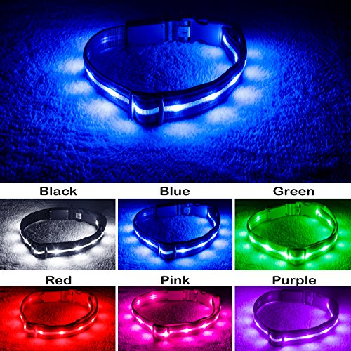 Blazin' Safety LED Dog Collar – USB Rechargeable with Water Resistant Flashing Light, Medium, Blue (Safety Pet Light)