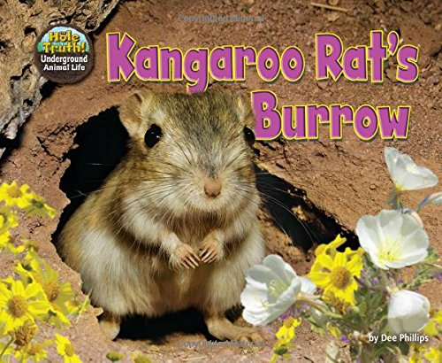 Kangaroo Rat's Burrow (Hole Truth! Underground Animal Life) (Kangaroo Rat Stuffed Animals)