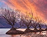 Jplo9|#Jp London MDXL1X586868 Jpl and Yan Zhang Present Glenorchy On Fire Flood Plain Africa Tree Dusk 12 Ft Wide by 8.5 Ft High Peel and Stick Fully Removable Wall Mural Extra Large