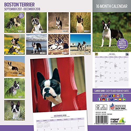 Boston Terrier 2018 Traditional Wall Calendar Photo #2