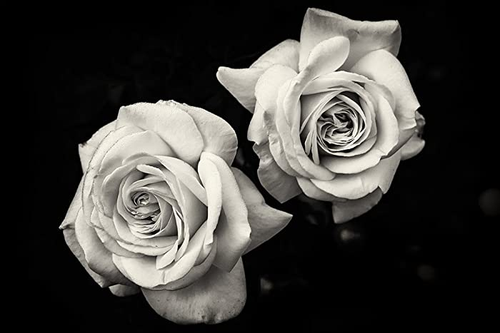 Amazoncom Flower Photography Roses Fine Art Photography Black
