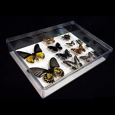 Muestras De Insectos Mariposas Caja De PláStico Transparente ...