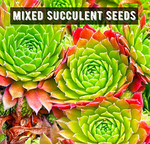 Succulent and Cactus Growing Kit - Complete with Succulent & Cacti Seeds, Pots, Organic Soil, and Comprehensive Growing Guide. Unique Indoor Garden Gift for Men & Women
