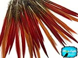 "Pheasant Feathers, 10 8-10"" Golden Pheasant Red Tips Loose Feathers"