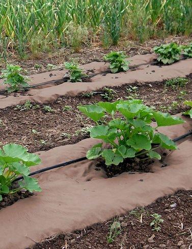Gardener's Supply Company Weedguard Plus Paper Mulch, 50