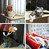 KisSealed Sunny Seat Cat Bed Window Mounted 50 lbs Cat Toy