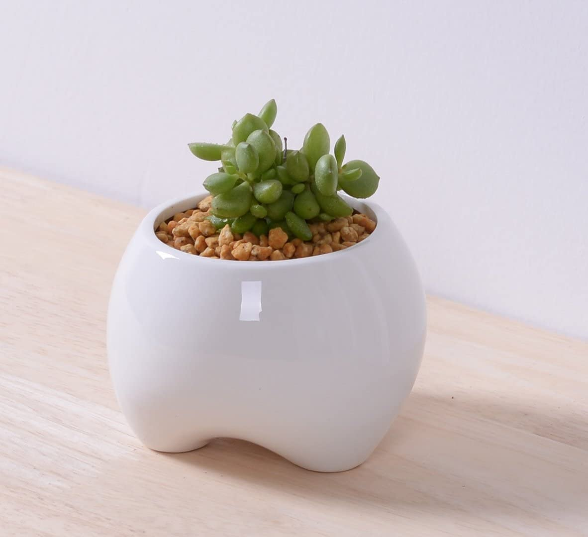 Rosa crear 2 pcs 3, 5 pulgadas blanco diente macetas, Cactus ...