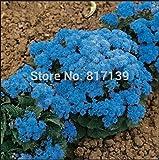 20 rare money flower seeds Mimulus Luteus 'Viva' seeds, Money Flowers, Perennial Herb Flowers, Multi-colored Plants